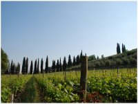 Vigne del Trentino Alto Adige