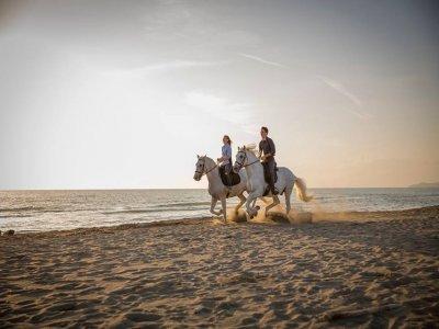 Tour a cavallo in spiaggia a Grosseto per 2 ore