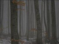 Nevischio fra i boschi