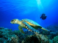 Become a diving guide