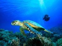 Diventare guida subacquea