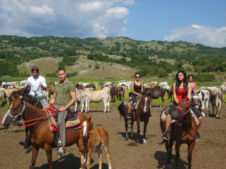 Cavalli liberi nella valle del Rodeo