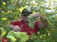 Local grapes