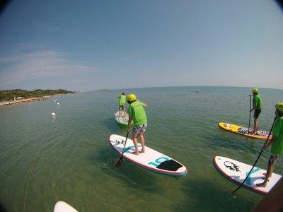 Free Surf Paddle Surf