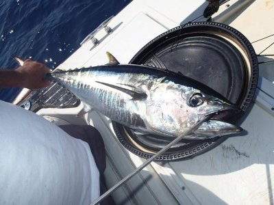 Fishing Charter 40 Parallelo Pesca