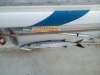 Un esempio di pescato
