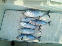 Pesci appena pescati