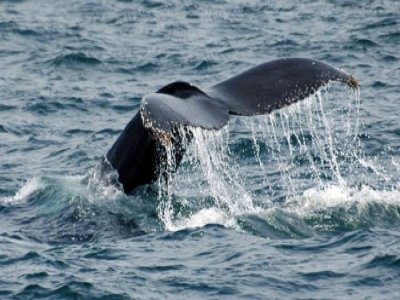 Cultura del Mare Whale Watching