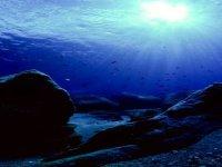 Meraviglioso ambiente marino