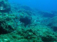 scuola subacquea
