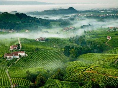 Prosecco Wine Tour in Veneto