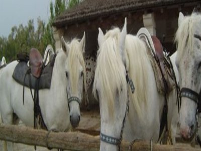 Club Avventura é Passeggiate a Cavallo