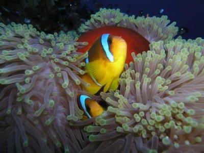 Nonsoloacqua Diving Club Belluno Diving