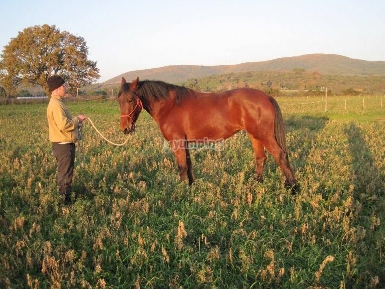 Uno dei nostri cavalli puro sangue
