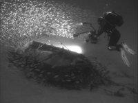 Fantastic dives