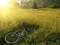 Mountain bike nel verde