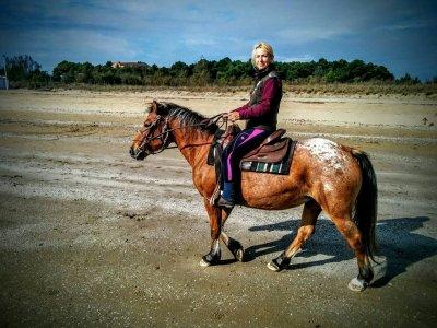 A.Q. Horses