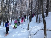 snowshoes among the trees
