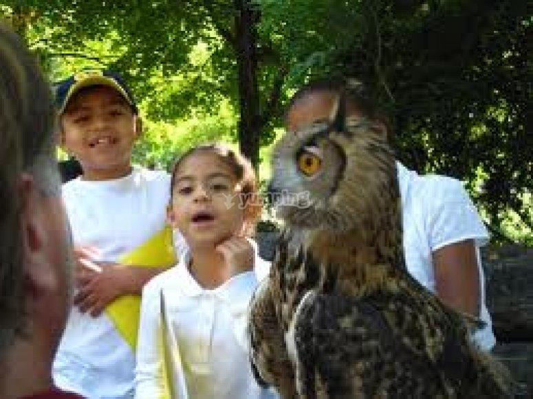 falconeria per le scuole