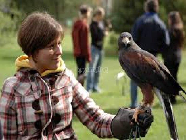 avvicinamento alla falconeria