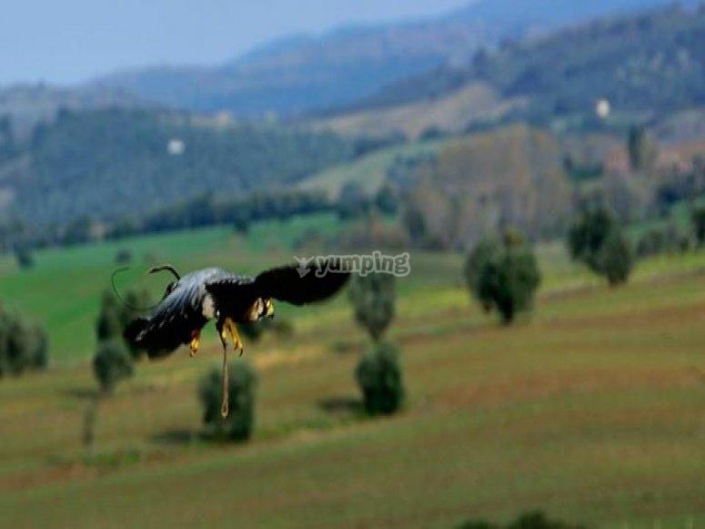 falconeria e natura