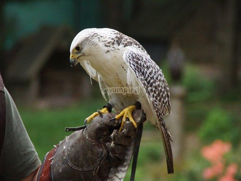 Stupendi animali