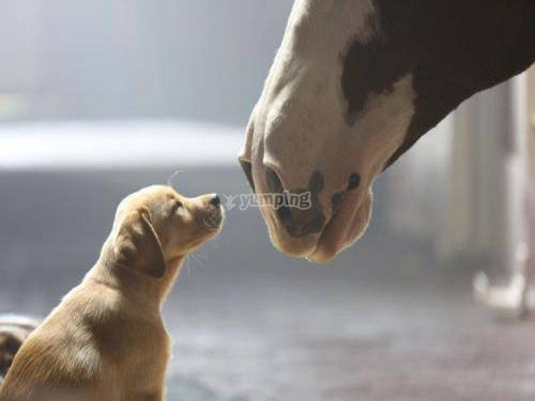 Scoprire i cavalli e le loro abitudini