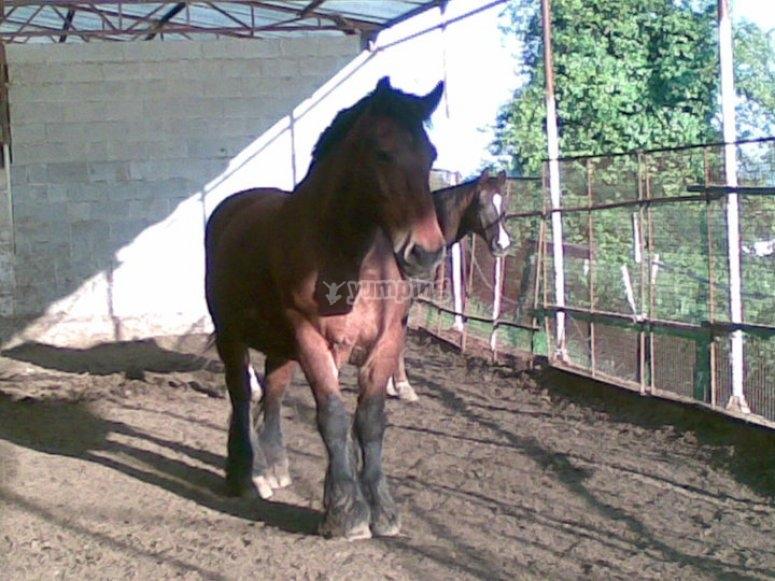 Settore western equitazione in Piemonte.jpg