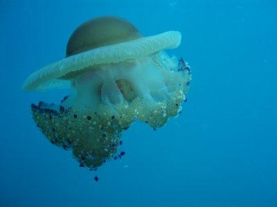 Eco di mare Diving