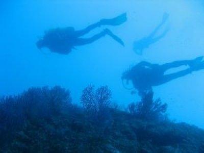 Moonlight Sub Diving Center Rapallo