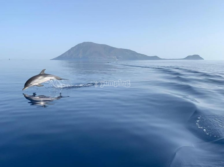 sightings of dolphins