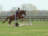 Scuola equitazione bambini e adulti