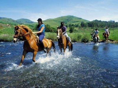 Ross Horses International