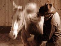Horse tour