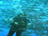 In un banco di pesci