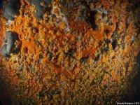 Una bellissima parete coperta da margherite di mare