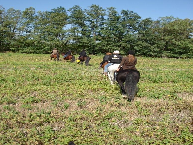 Tutti a cavallo in Maremma