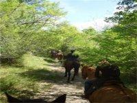 bosc maremmano a cavallo
