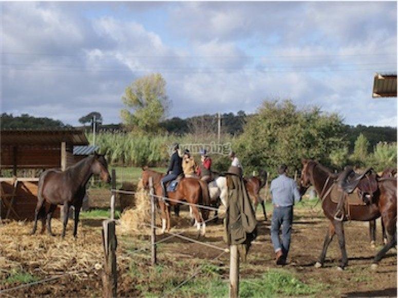 A Cavallo in Maremma fra i vigneti