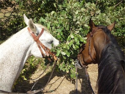 San Valentino a cavallo in Maremma