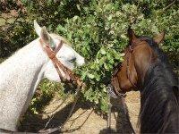 Romantico San Valentino a cavallo