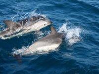 Alla ricerca dei delfini