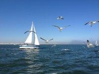 Barca a vela con gabbiani