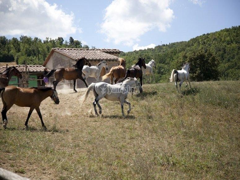 Passeggiate a cavallo per semi esperti