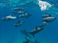 The realm of dolphins