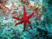 Immersioni Ischia