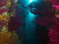 I coralli dei nostri fondali
