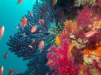 Pesci coralli e colori