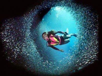Milanoinmare Diving