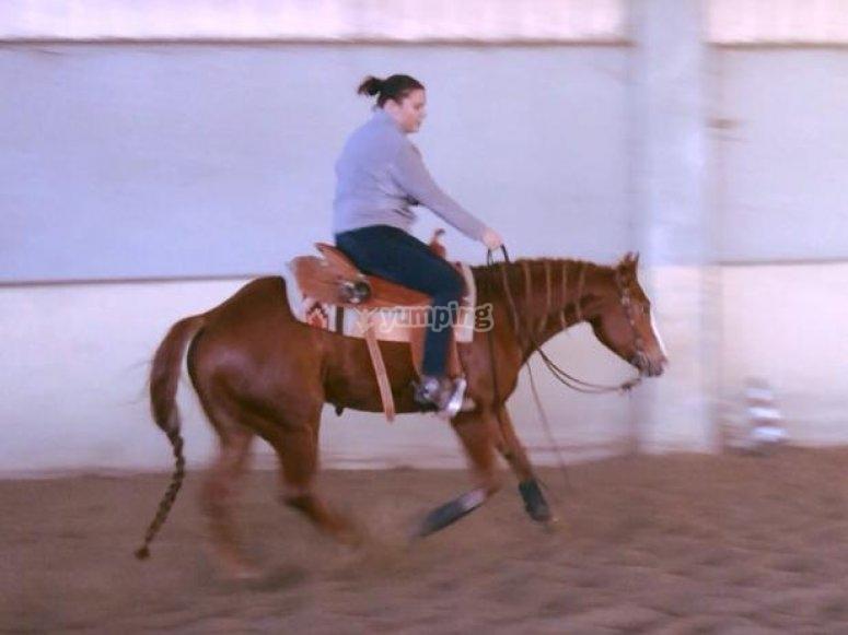 Equestrian improvement course